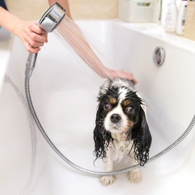pet grooming West Chester ohio